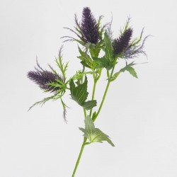 Cone Thistle Purple