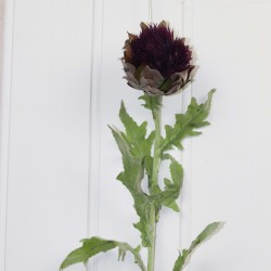 Single Lavender Thistle Flower