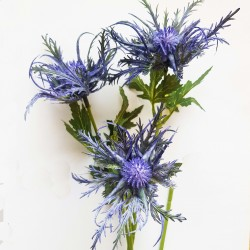 Sea Holly Thistle Flower Blue